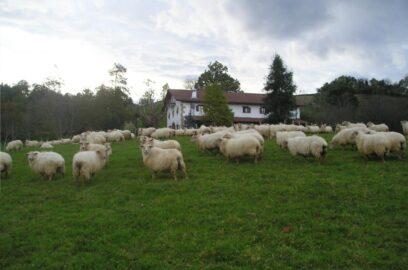 animales 1 casa rural iragorri 1000