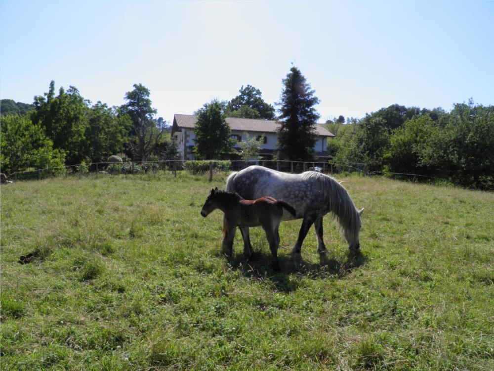animales casa rural iragorri 1000
