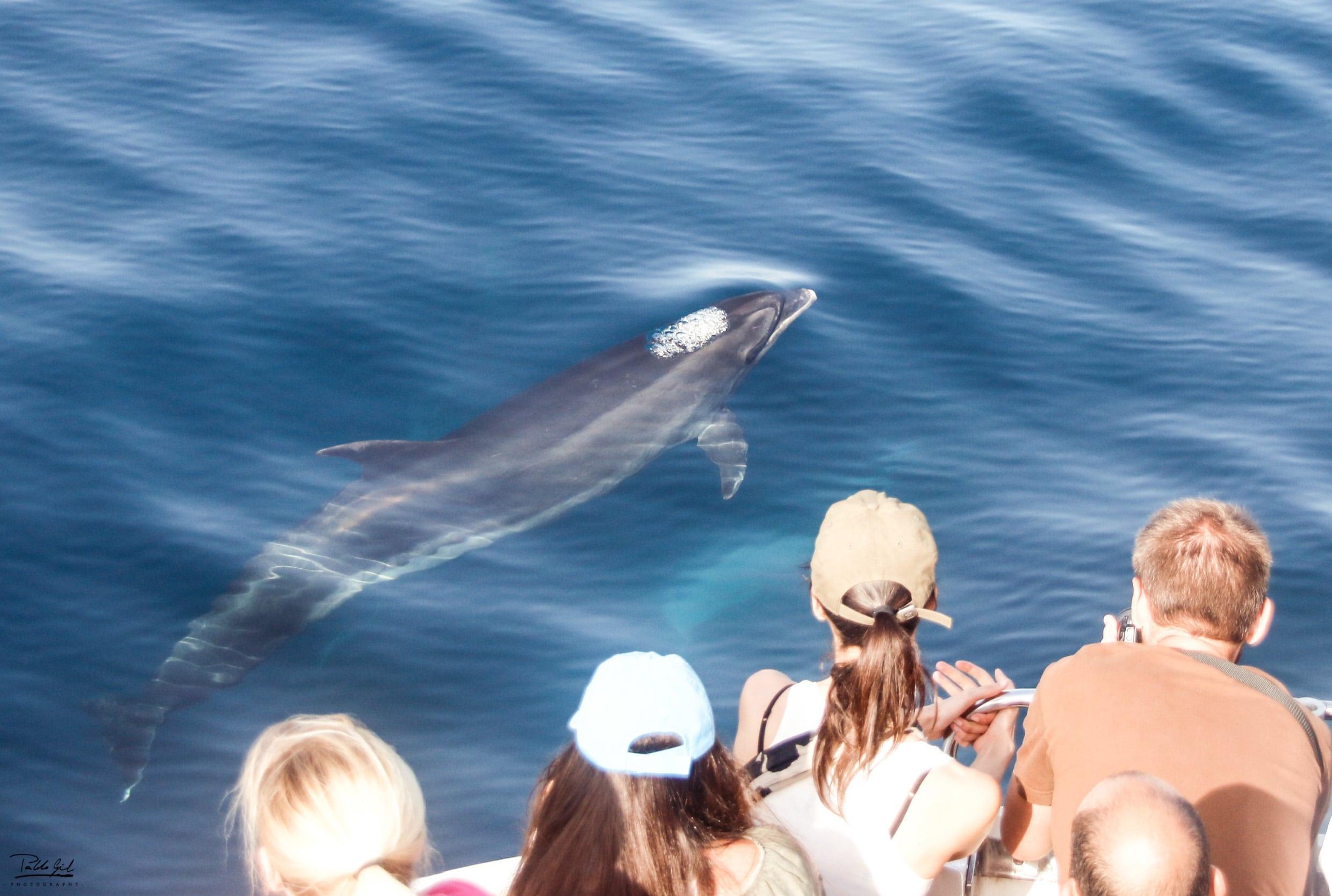 Gente con delfin