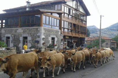 la posada vacas
