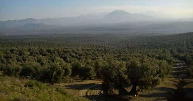 fincas de olivar baeza